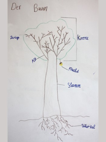 Sachunterricht, Bäume