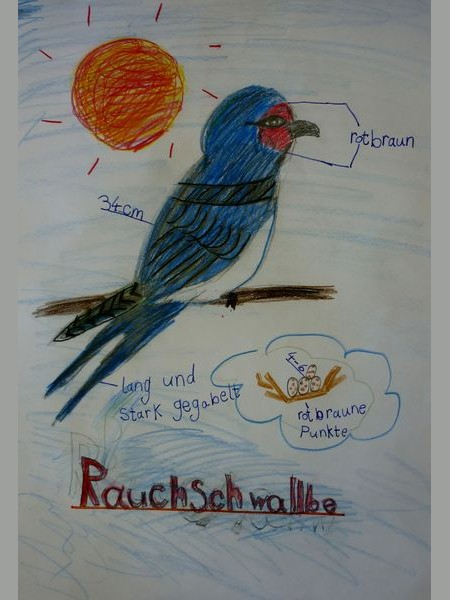 Sachunterricht, Vögel